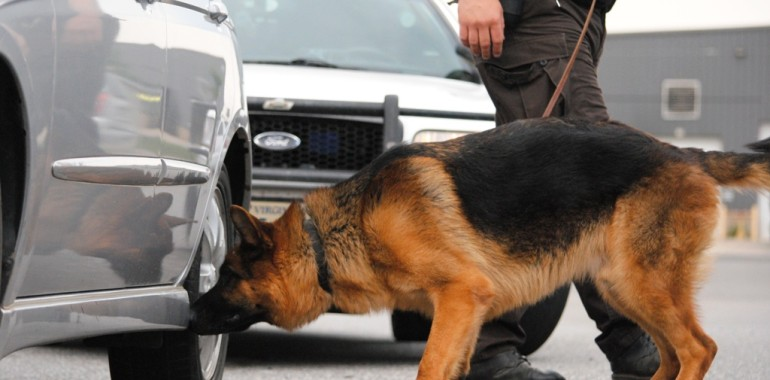 What Drugs Can Sniffer Dogs Smell